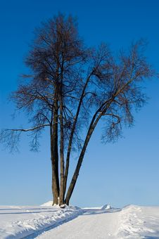 Free Tree By The Road Royalty Free Stock Photos - 1936328