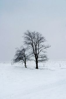 Free Tree On Snowy Hill Royalty Free Stock Photo - 1936765