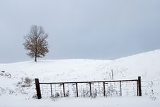 Free Tree On Snowy Hill Near Fence Stock Image - 1936781