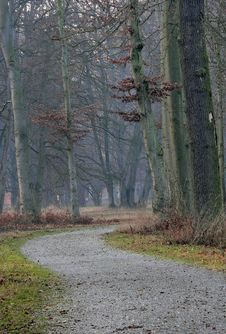 Free Forest In Baviera Stock Image - 1938081
