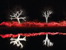 Free Lakeside Trees And Bushes Covered In Lights Royalty Free Stock Image - 1939046