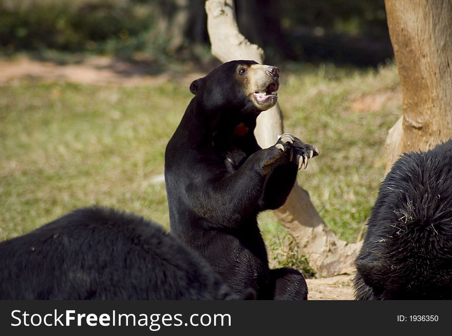 Funny Black Bear - Free Stock Images & Photos - 1936350   StockFreeImages.com