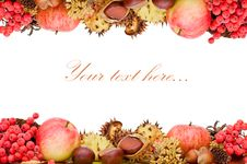 Free Autumn Leaves And Fruits Isolated Royalty Free Stock Photography - 19300697