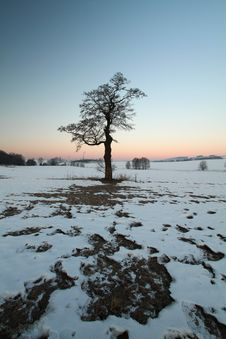 Free Morning Tree Royalty Free Stock Photo - 19301015
