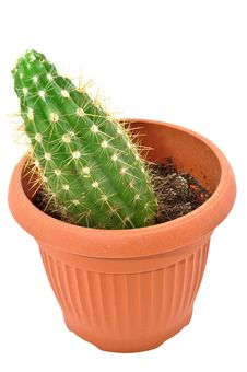 Free Cactus In A Pot. Isolated On White Background Stock Photography - 19301102
