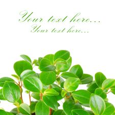 Free Green Leafs Background Stock Photography - 19301812