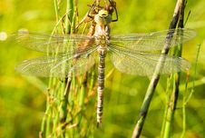 Free Dragonfly Against Green Grass Background Royalty Free Stock Photography - 19302247