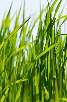 Free Fresh Green Grass Stock Photography - 19303832