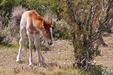Free Wild Foal In Nevada Desert Royalty Free Stock Photo - 19305425