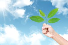 Free Fresh Green Leaf In Hand Against The Sky Stock Photo - 19306320
