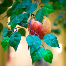 Waxen Apple Royalty Free Stock Photo