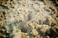 Camouflage Crab On The Beach Stock Photo
