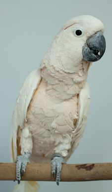 Free Parrot Stock Photography - 19309702