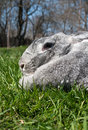 Free Big And Rabbit On Green Grass Royalty Free Stock Image - 19313466