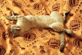 Free Cat Sleeps Without Hind Legs. Royalty Free Stock Photos - 19318388