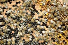 Free Bee Stock Image - 19311031