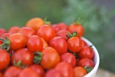 Free Organic Tomatoes Stock Photos - 19312033