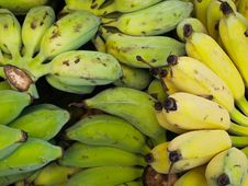 Free Pile Of Tropical Thailand Bananas Stock Photography - 19313382