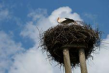 Free Stork Nest Stock Photography - 19314282