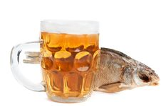 Sea Roach And Beer Royalty Free Stock Photos