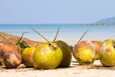 Free Coconuts On The Beach Stock Photo - 19315490