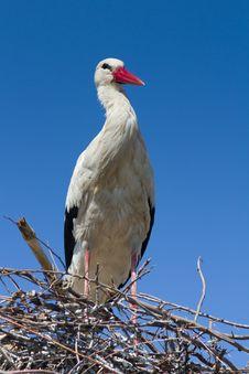 Free White Stork  / Ciconia Ciconia Stock Image - 19315591