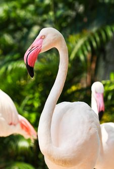 Free Flamingo Stock Images - 19317684