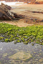 Free Beach Of Green Stones Stock Images - 19321994