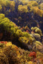Free Beautiful Forest Aerial View Stock Image - 19327911