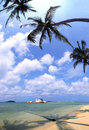 Free Coconut Tree Royalty Free Stock Images - 19328999