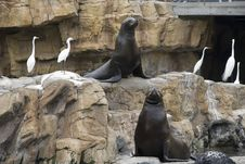 Free Two Sea Lions Royalty Free Stock Images - 19320289