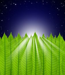 Free Leaves On Stars In The Night Sky Royalty Free Stock Images - 19320459