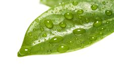 Free Green Leaf Stock Image - 19321431