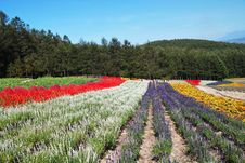 Free Flower Fields Royalty Free Stock Photos - 19322608