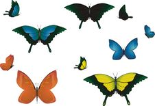 Multicolored Butterflies. Stock Photo