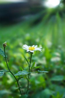 Free White Flower. Royalty Free Stock Photo - 19324225