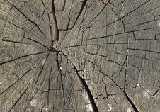 Free Cracked Old Wood Stump Royalty Free Stock Photo - 19325595