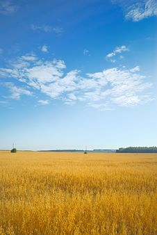 Free Barley Field. Stock Photography - 19326542