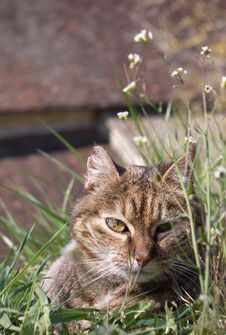 Free Cat In Grass Stock Photo - 19327100