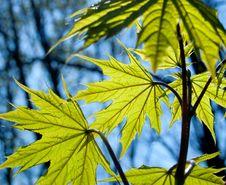 Free Green Leaf Stock Image - 19328111
