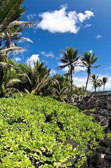 Free Tropical Beach With Ocean Views Royalty Free Stock Photos - 19328208