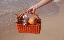 Free Shellfish Royalty Free Stock Photo - 19328765