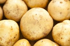 Free Fresh Potatoes Royalty Free Stock Photography - 19329467