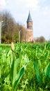Free Bud Of Tulip Royalty Free Stock Photo - 19333865