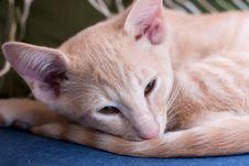 Free Sleepy Cat Stock Image - 19330251