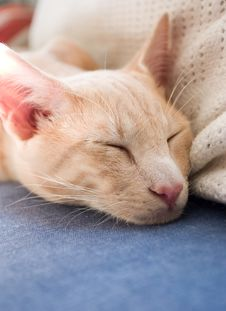 Free Tired Cat Again Stock Images - 19330724