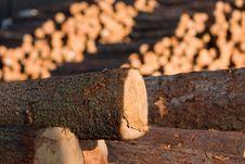 Free Timber Royalty Free Stock Image - 19331266
