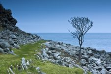 Free A Tree In Northern Ireland Royalty Free Stock Photos - 19334758