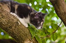 Free Hunting Cat Royalty Free Stock Images - 19335129