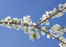 Free Spring Tree Stock Photo - 19335390